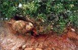 Минеральная вода «Боградская»