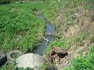 Река Ольшанка (Алчанка)