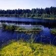 Водоёмы Ельцовского района