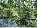 Исток реки Иля