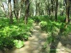 Река Ташла